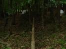 Buschenschankbaum aufstellen 2008_1