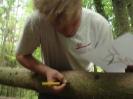 Buschenschankbaum aufstellen 2008_4