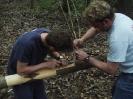 Buschenschankbaum aufstellen 2008_7